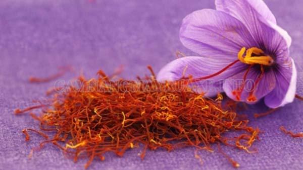 Nhụy hoa nghệ tây là mặt hàng được nhiều người ưa chuộng